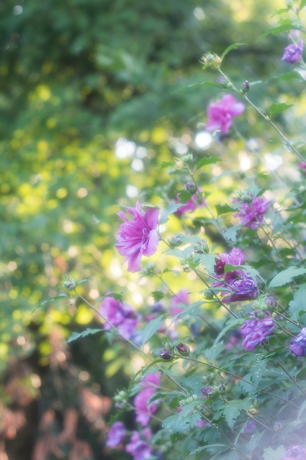 Floral Photography | Created by Jen Blog