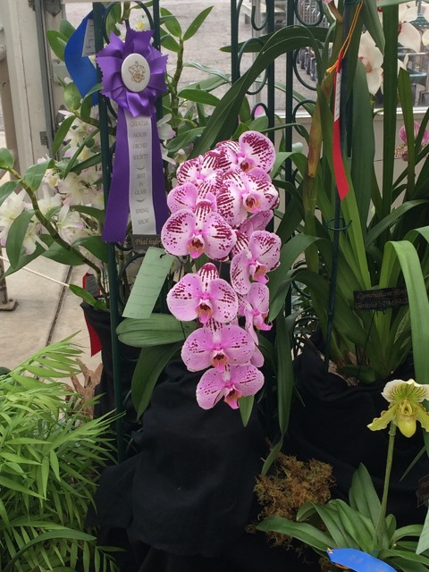 Spring Orchid Show | Created by Jen Blog
