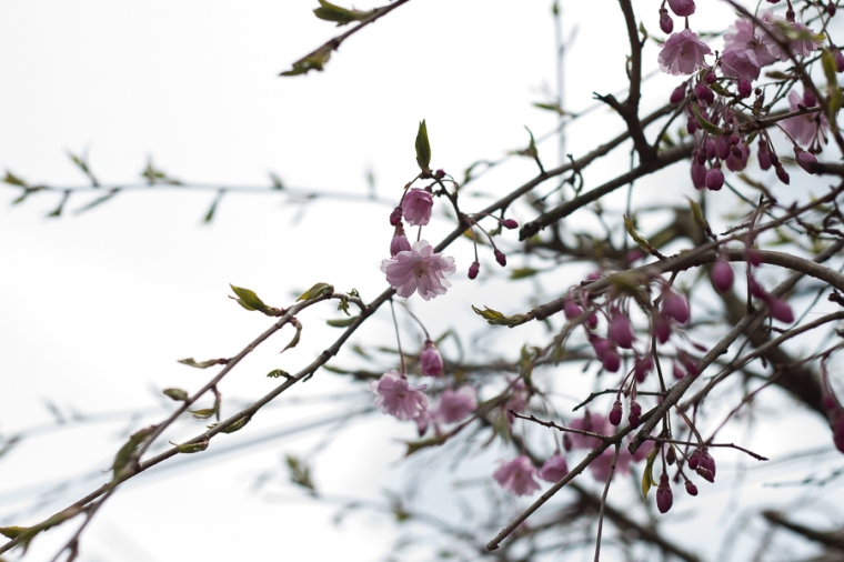 Spring Blossoms | Created by Jen Blog